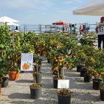 orange-tree-market