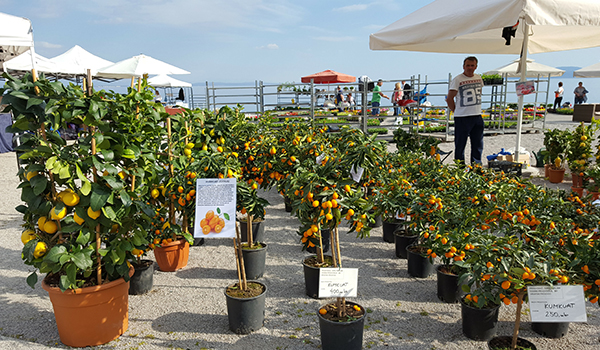 orange-tree-market